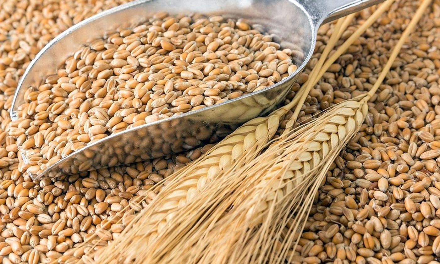 ECONOMY MINISTRY IMPROVES FORECAST FOR GRAIN HARVEST IN UKRAINE